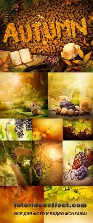 Stock Photo: Autumn leaves and fruit