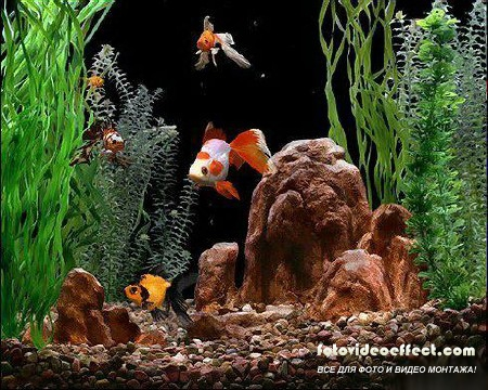 Gold Fish Aquarium v2.1 + Rus